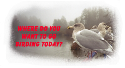 Where do you want to go birding today? - logo